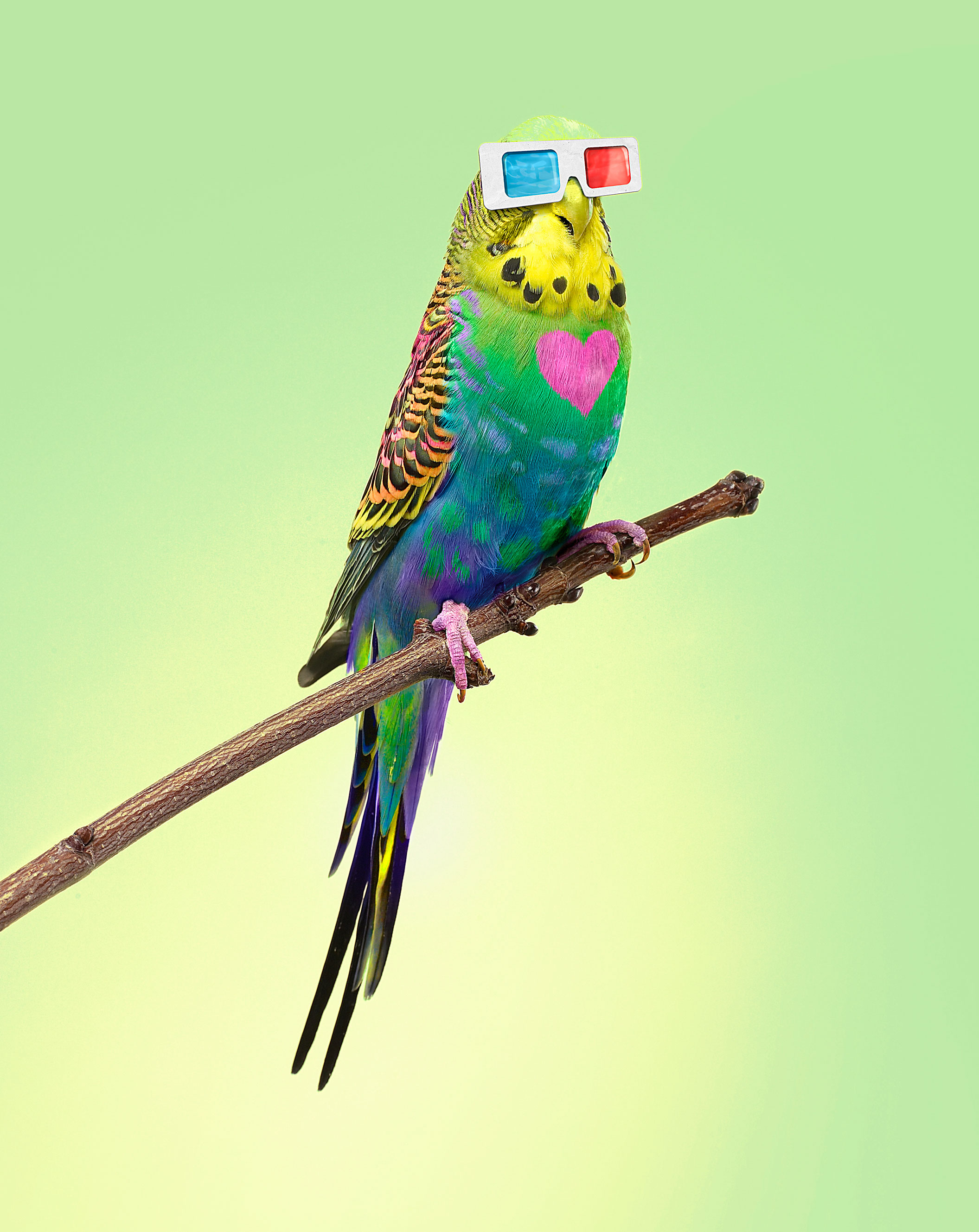 Parrot in 3D Glasses